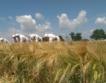 22% от пшеницата е ожъната