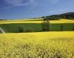 Добрич: 25 хил. тона реколта от рапица