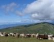 Крави и дрехи, земя и климат
