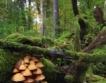 България с разраснал се горски фонд