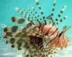 Кипър насърчава консумацията на отровна риба
