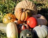 Четири модела за успешно земеделие