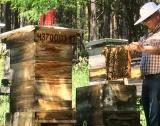 Украйна: Срив в изкупните цени на пчелния мед