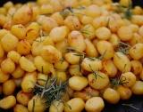Полша: По-ниски изкупни цени на картофите