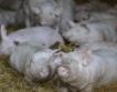 Наредба: По-малко животни в личните стопанства