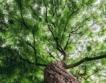 Възможна ли е въглеродна неутралност и как?
