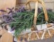 България - лидер в събиране на билки