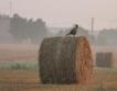 Суша & земеделие: По-големи авансови плащания