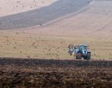 Очаква се реколта от 1 245 000 дка пшеница