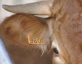 Животновъдите разсрочват кредити до 10 януари 2020 г.