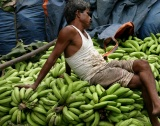 Ще се свие ли пазарът на банани и свинско месо?