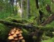 ЕС допуска внос на нелегална дървесина