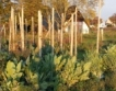 Без пестиците през деня върху нивите