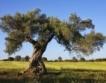 Бургас: Дървета срещу мръсен въздух