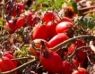 4 пъти по-голям бюджет за растениевъдство