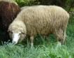 Албански фермери банкрутират