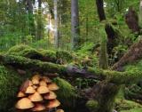 Сделки за малки горски имоти