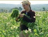 76 млн.лв. помощ на тютюнопроизводители