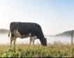 Въглеродно неутрално мляко планира финландска ферма