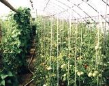 5 млн.лв. за оранжерийни производители