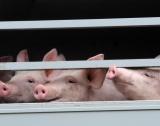 Прием по мярка за биосигурност на ферми