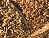310 лв. за тон пшеница