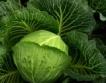 БАБХ спря 20+5 тона вносни зеленчуци