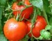 По-малко засети пепер, домати на открито