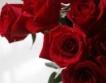 Русия: Срив в производството на рози