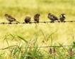 Продължават плащанията за агроекология