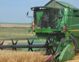 215 кг от пшеница в Добричка община