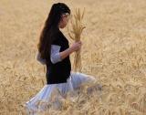 Очаква се 30% по-слаба реколта от пшеница