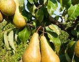 Нови възможности за овощари