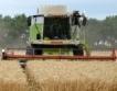 Ловеч: 522 кг/дка среден добив пшеница