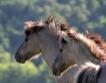 Конни бази продават част от животните