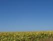 Суховеят вреди на реколтата в Добруджа