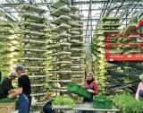 ЕС с мащабна схема за еко земеделие