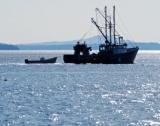 Възможностите за риболов в Балтийско море