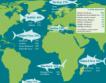 Риболовът в ЕС + инфографики