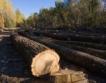 Приложение за незаконни дейности в гората