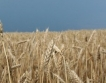 Слаба реколта от зърно в Европа