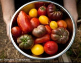 БАБХ спря 512 тона плодове, зеленчуци