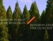 Вековните секвои при с. Богослов