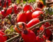 Земеделие: По-високи цени при производител