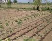 Основните земеделски култури - пазарни данни до март
