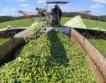 Италианските фермери загубиха 1,7 млрд. евро