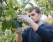 177 млрд.евро произведе земеделието в ЕС