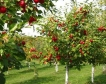 12 млн.лв. за производители на зеленчуци и плодове