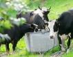7.5 млн.лв. за родословна книга & селекция на животни