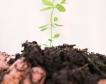 Фирми: ТЕЦ Враца ще използва биомаса